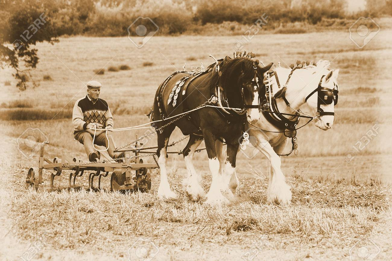 Vintage Horse Ploughing Stock Photo Picture And Royalty Free Image Image 92561450