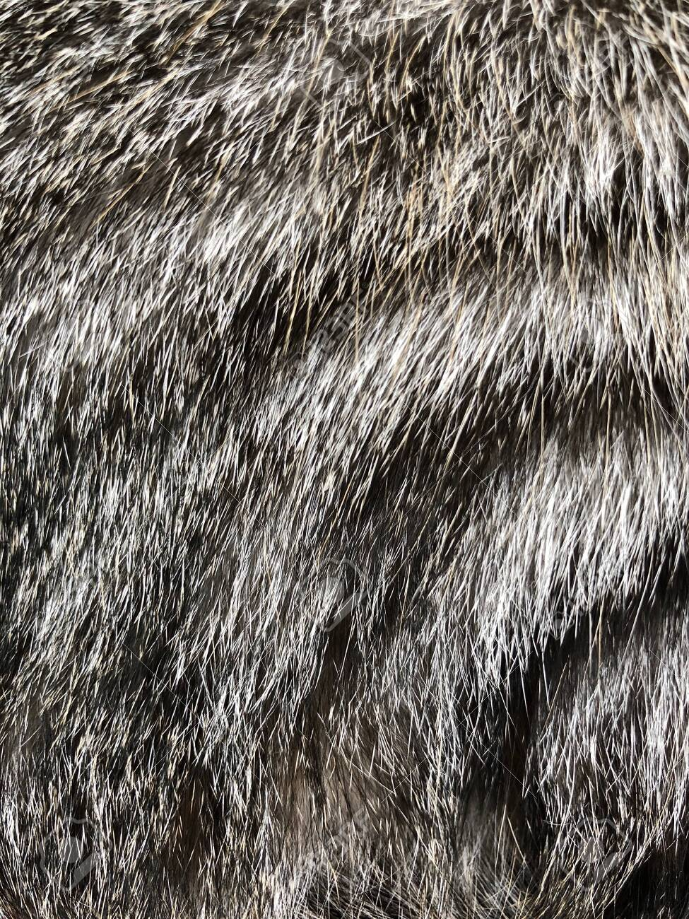 Cat hair background texture - 149313357