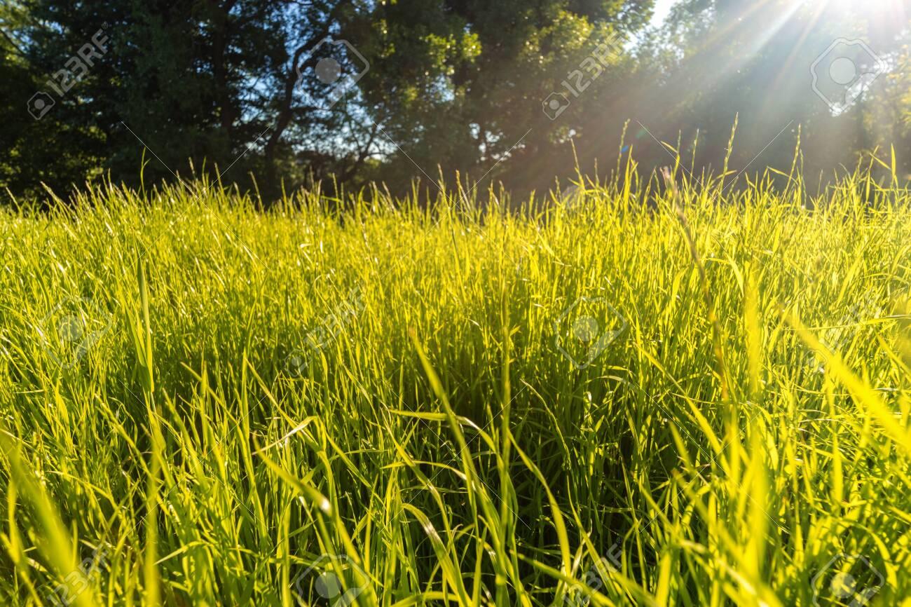Green grass in sunlight - summer nature background - 150886837