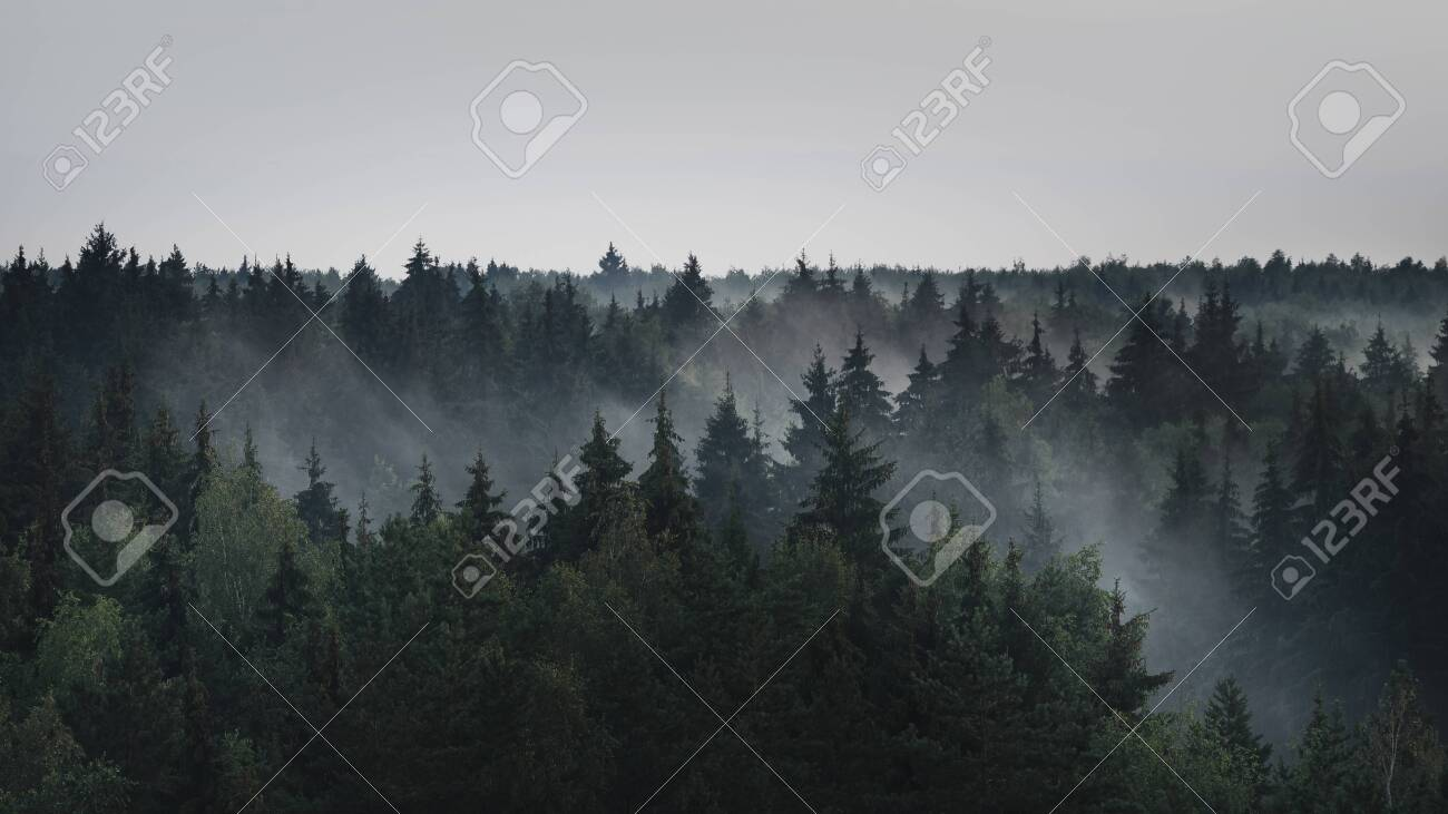 Landscape panorama of dark misty fir forest in the fog in the rainy weather - 152797344
