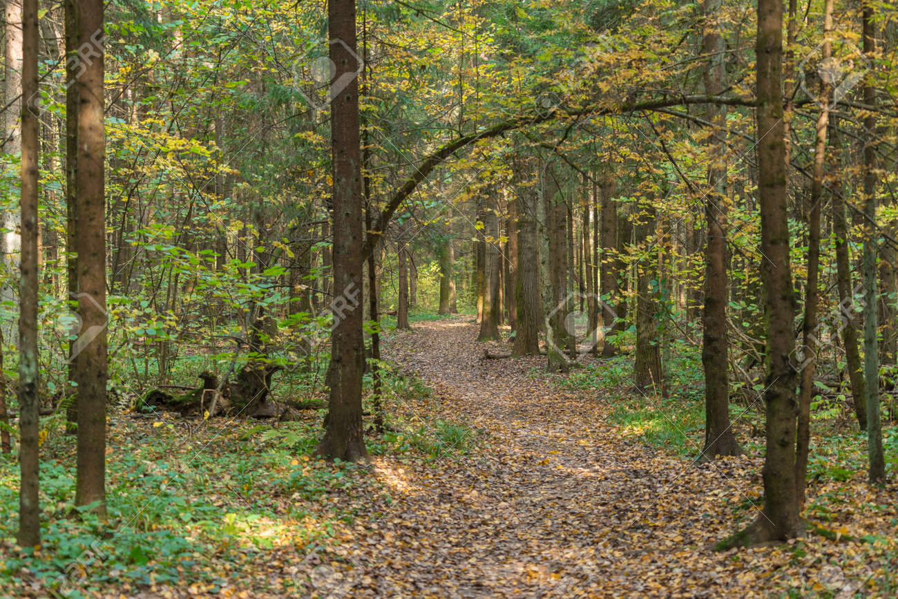 Path in autumn forest among trees in fall season - 156846762