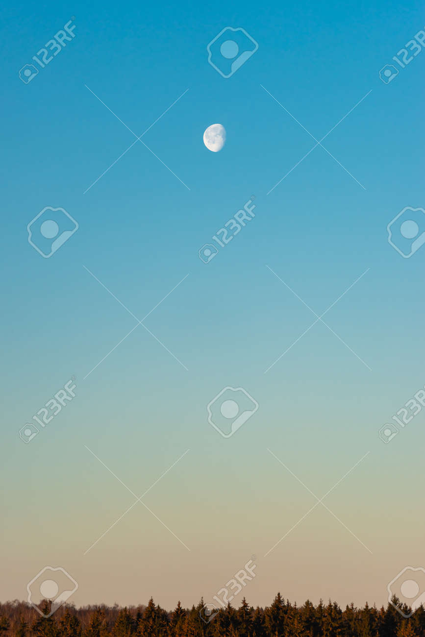 Moon on blue sky above forest horizon in the morning - 165512957