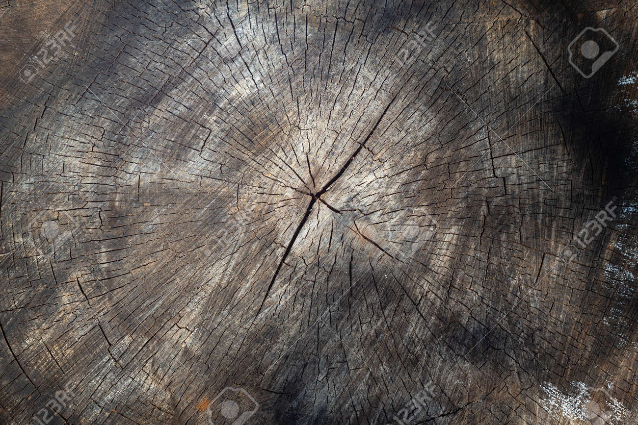 An old round sawn tree with cracks. Textured natural vintage background - 172745604