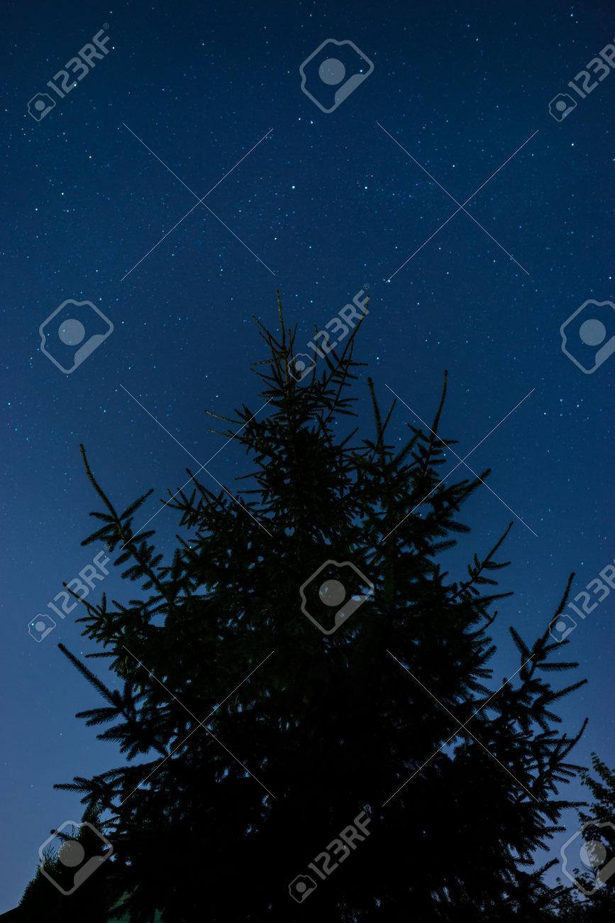 Fir tree against the stars on night sky - 172844348