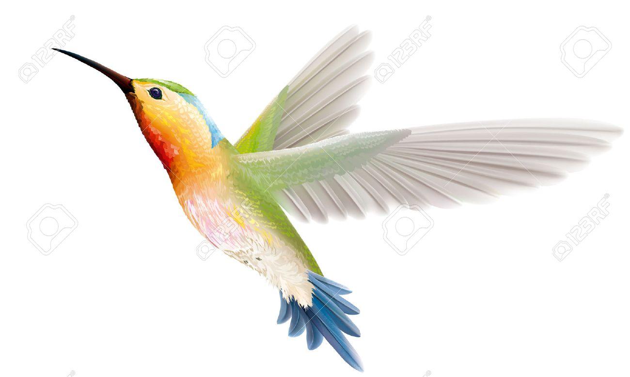 hummingbird images u0026 stock pictures royalty free hummingbird