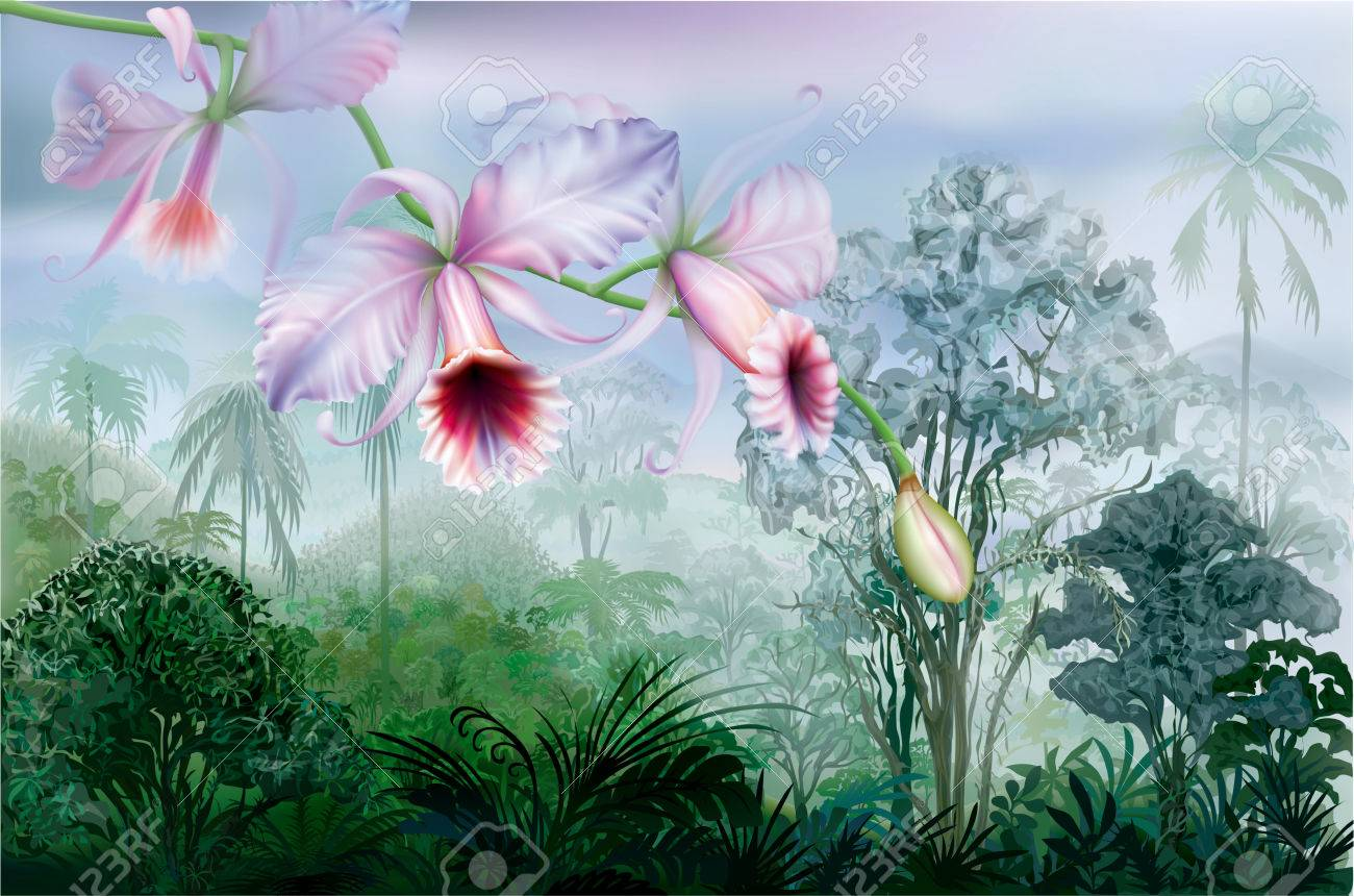 Orchideen im tropischen regenwald  Cattleya Orchideen Auf Einem Hintergrund Tropischen Regenwald ...