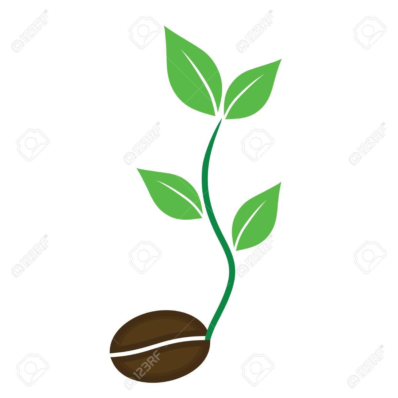 coffee plant vector seed icons vector royalty free cliparts vectors rh 123rf com plan vectoriel plant vector stock request