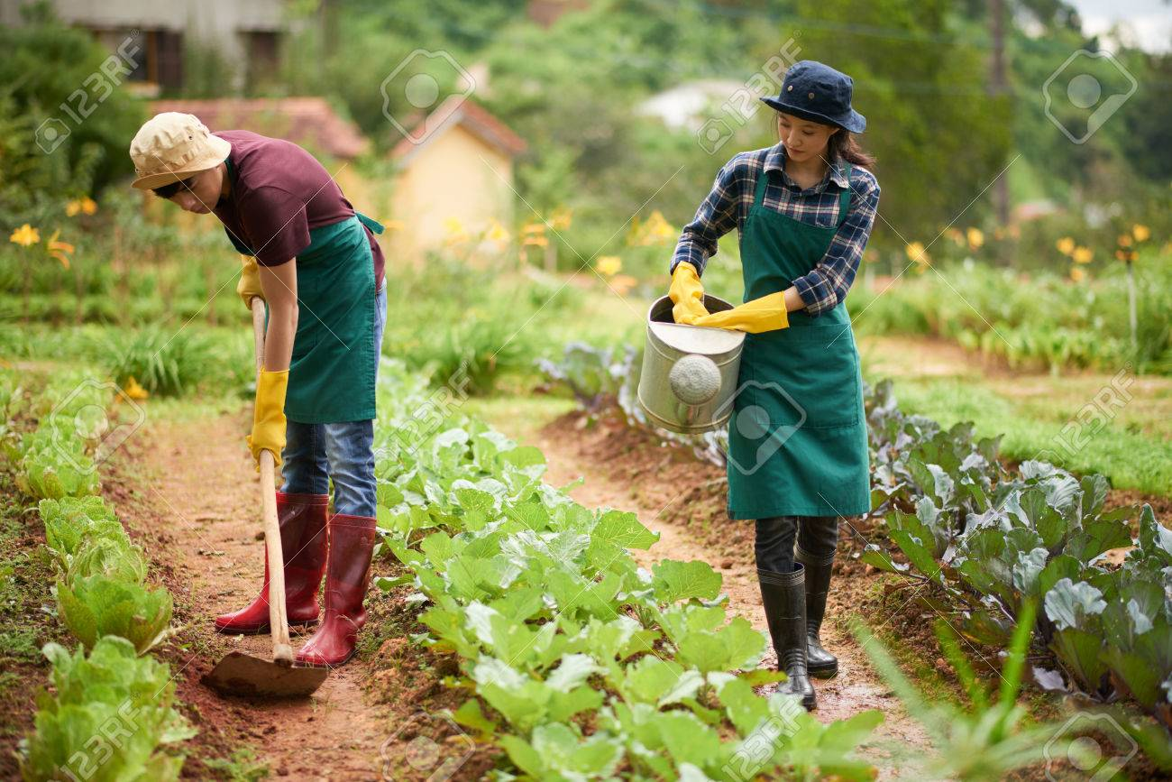 Stock Photo - Young Asian couple working at spacious backyard garden   pretty woman watering plants while her handsome boyfriend hoeing soil 0db819ed9375