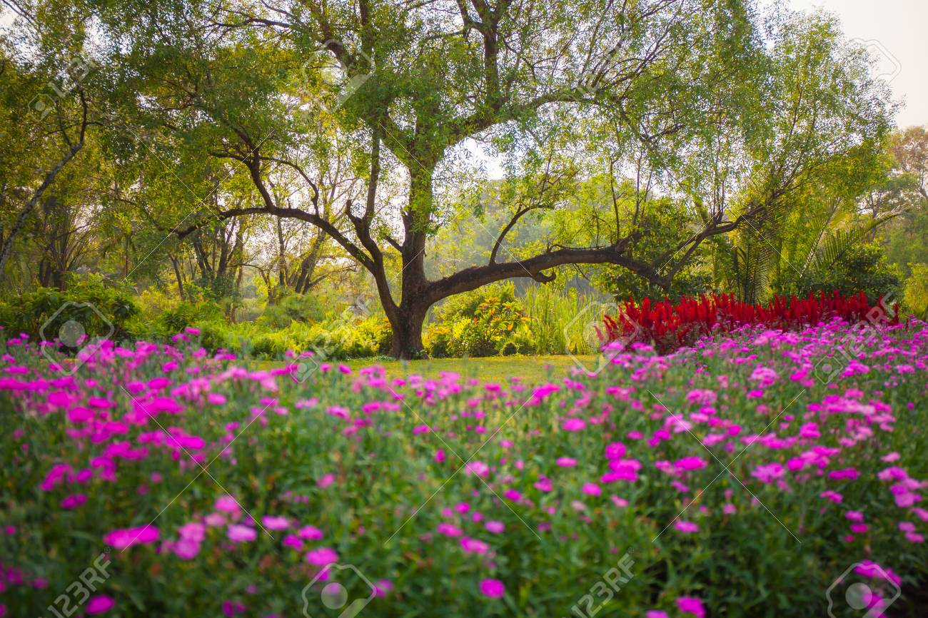 Colorful Spring Summer Park With Flowers, Green Grass And Trees ...