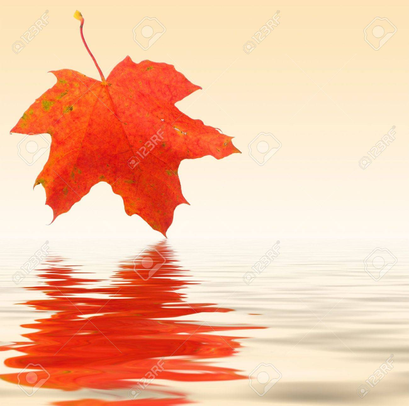 Red maple leaf is mirroring in the water - autumn background Stock Photo - 1989856