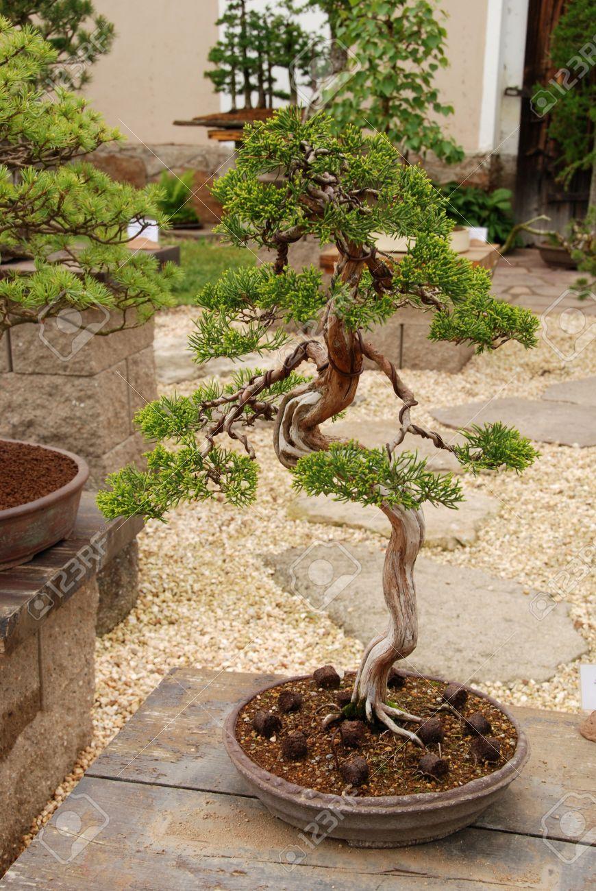 Miniature In A Peaceful Japanese Garden. Stock Photo