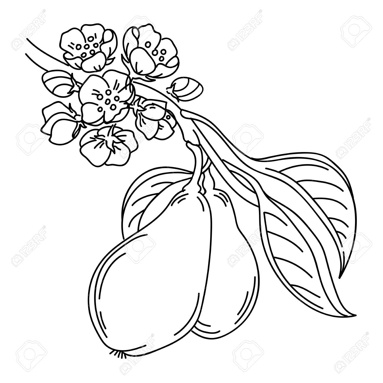 Illustration of a pear tree twig in sketch style with flowers bloom and ripe fruits