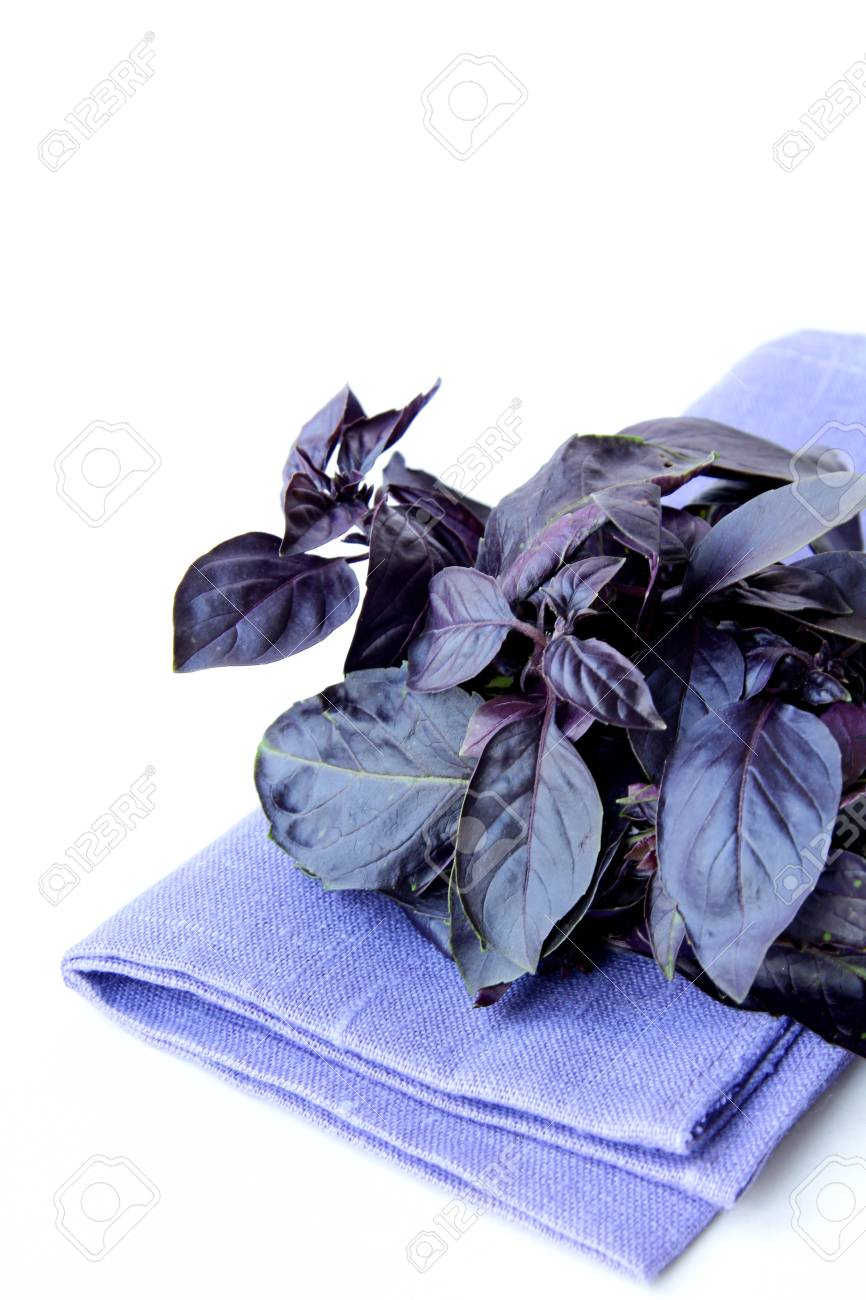 red purple basil spice leaf  on white background Stock Photo - 10667455