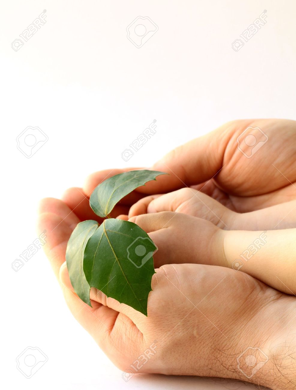 father's and baby's hands holding plant Stock Photo - 12040310