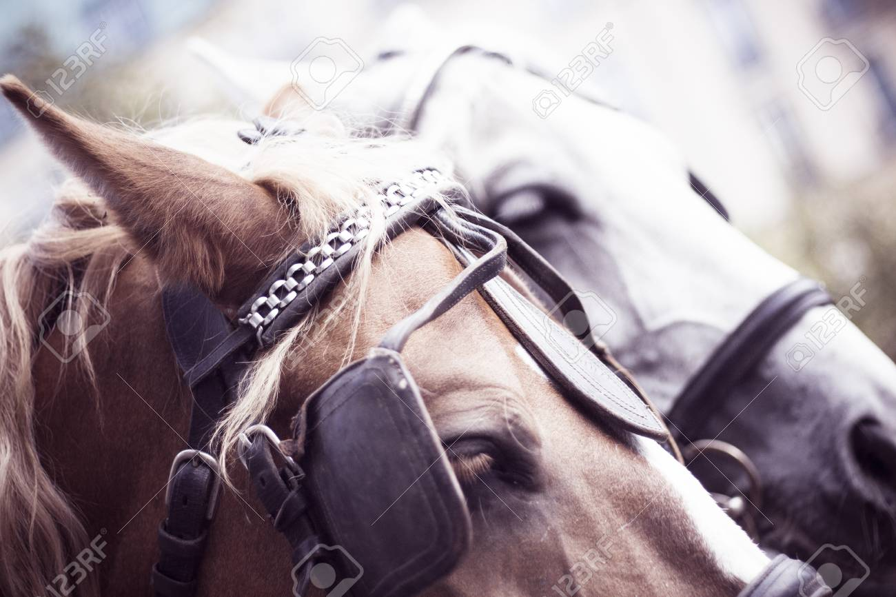 Heads Of A Brown And White Horse Of A Carriage In Berlin With Stock Photo Picture And Royalty Free Image Image 108392981