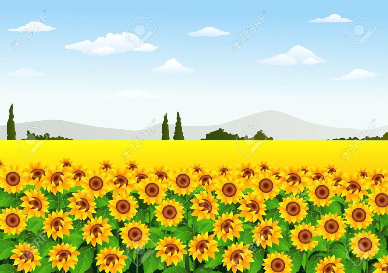 Vector Illustration Of Illustration Of Sunflower Field Royalty Free Cliparts Vectors And Stock Illustration Image 63268701