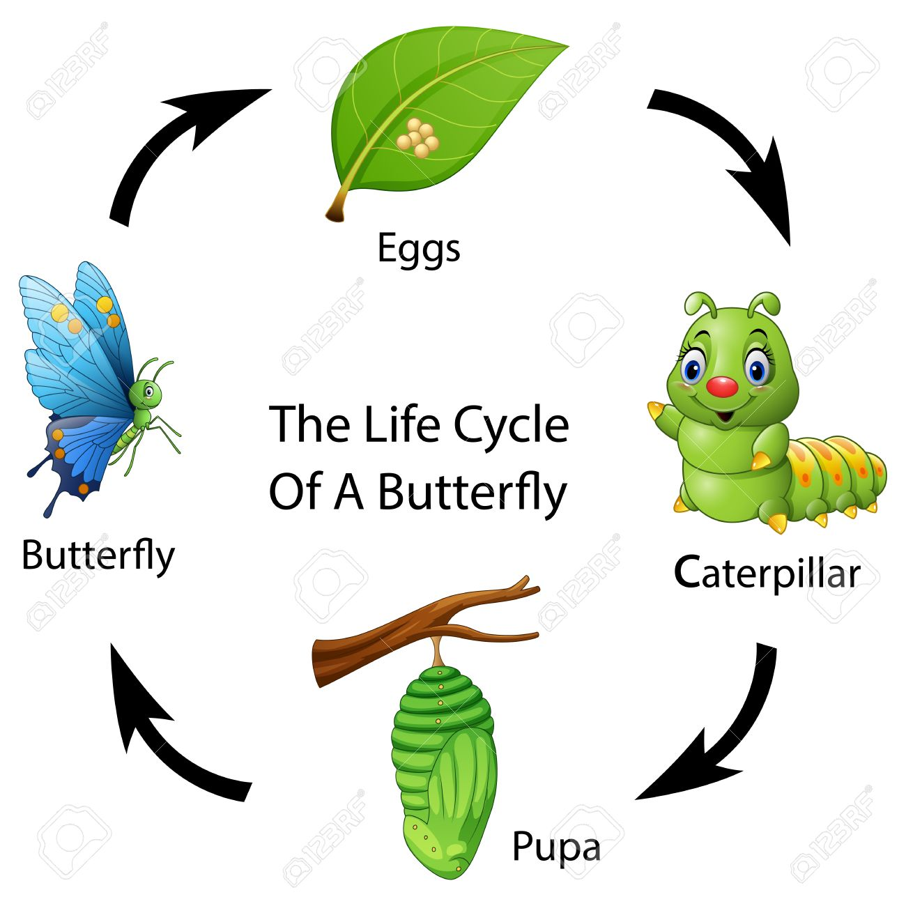 Ilustración Del Vector Del Ciclo De Vida De Una Mariposa ...