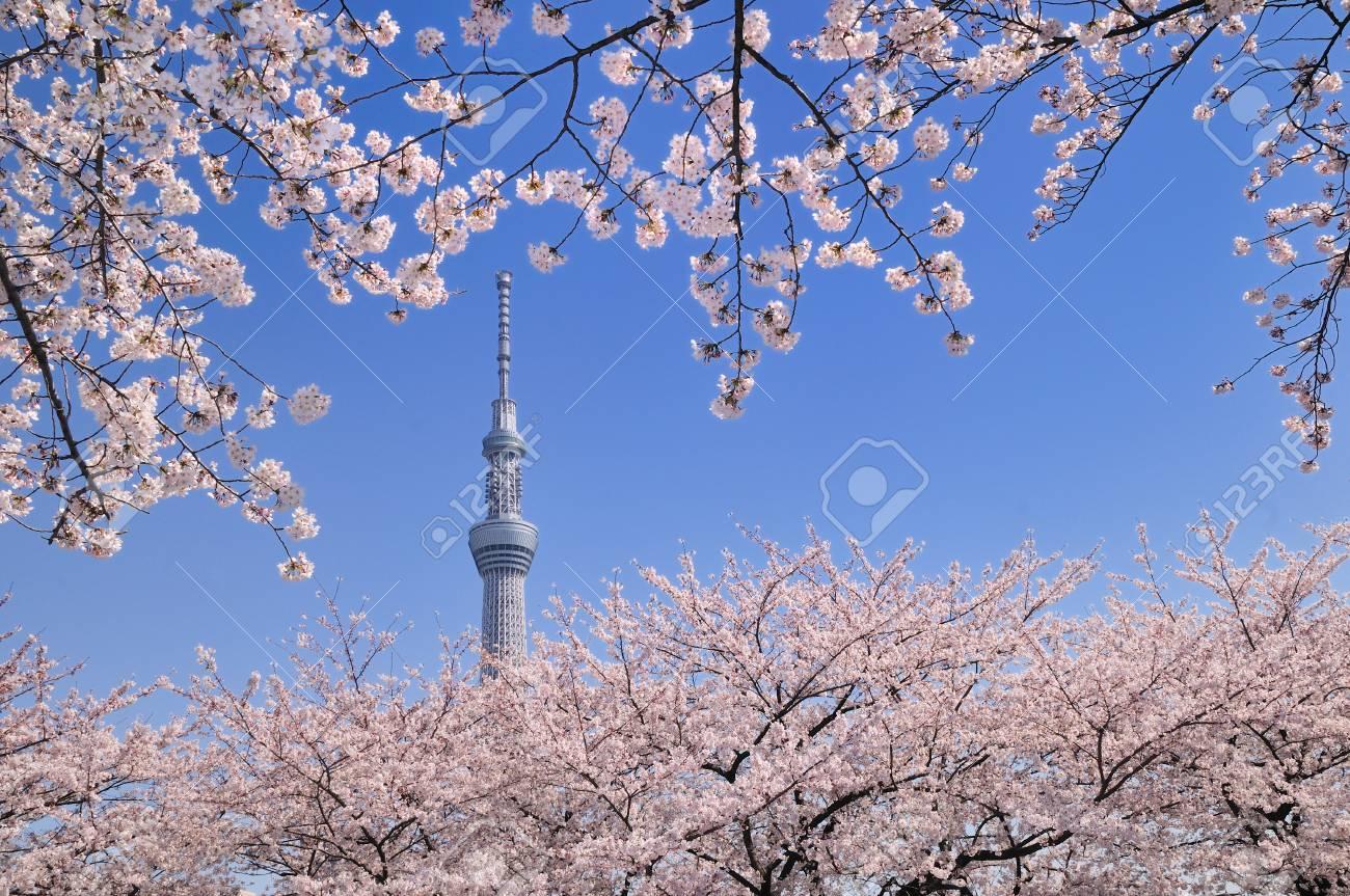 The Tokyo sky tree - 76075933