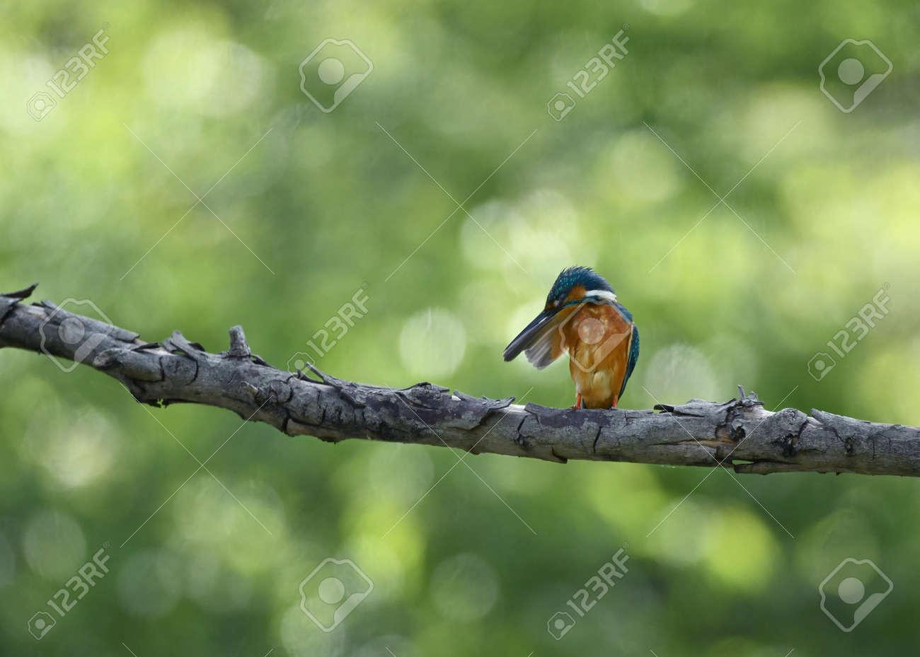 Male kingfisher on a break - 169894019