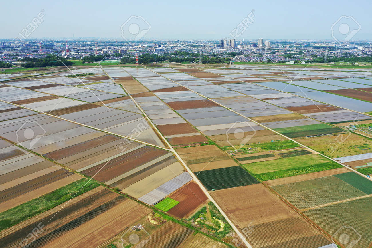 Aerial shot of rice field before rice planting - 169894343