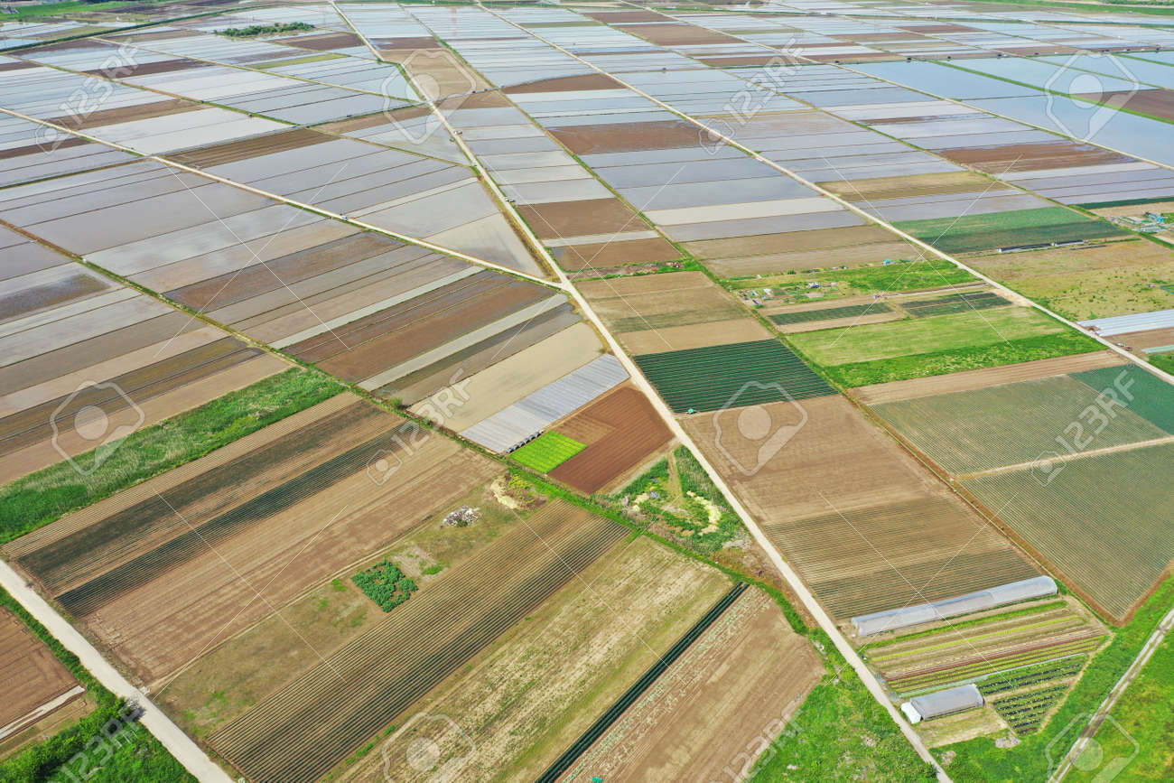 Aerial shot of rice field before rice planting - 169894365