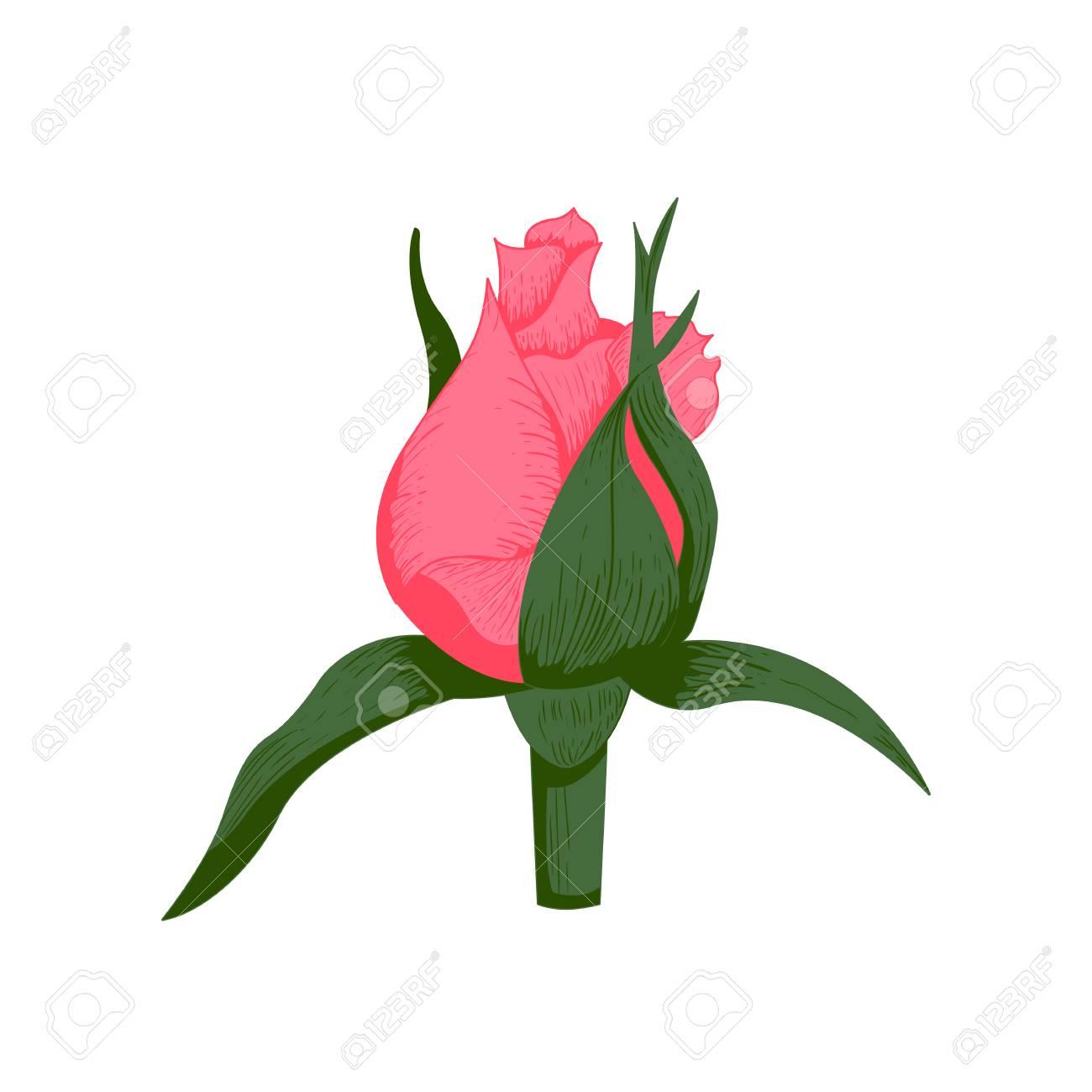 vintage rose flower vector illustration royalty free cliparts rh 123rf com vintage flower vector cdr vintage flower vector pattern