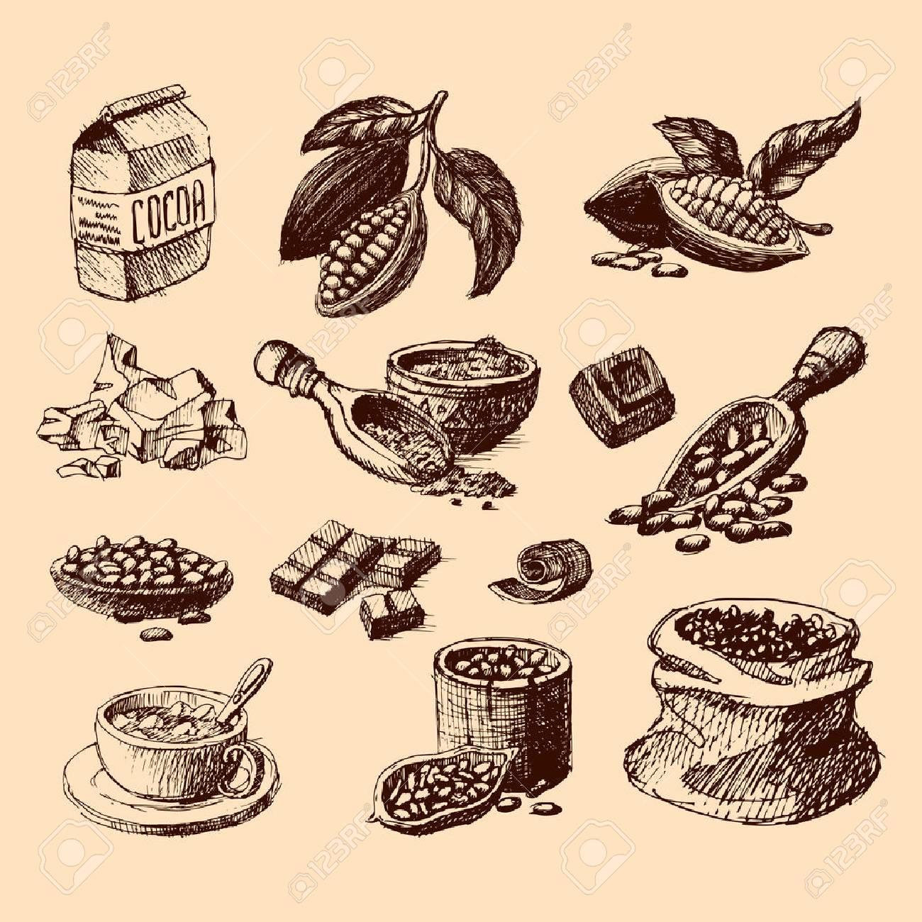 Vector cocoa hand drawn sketch illustration. - 70981822