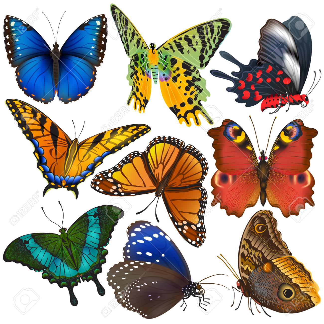 21dc1b78d4daa8 Butterfly vector colorful insect flying for decoration and beautiful  butterflies wings fly in spring illustration set