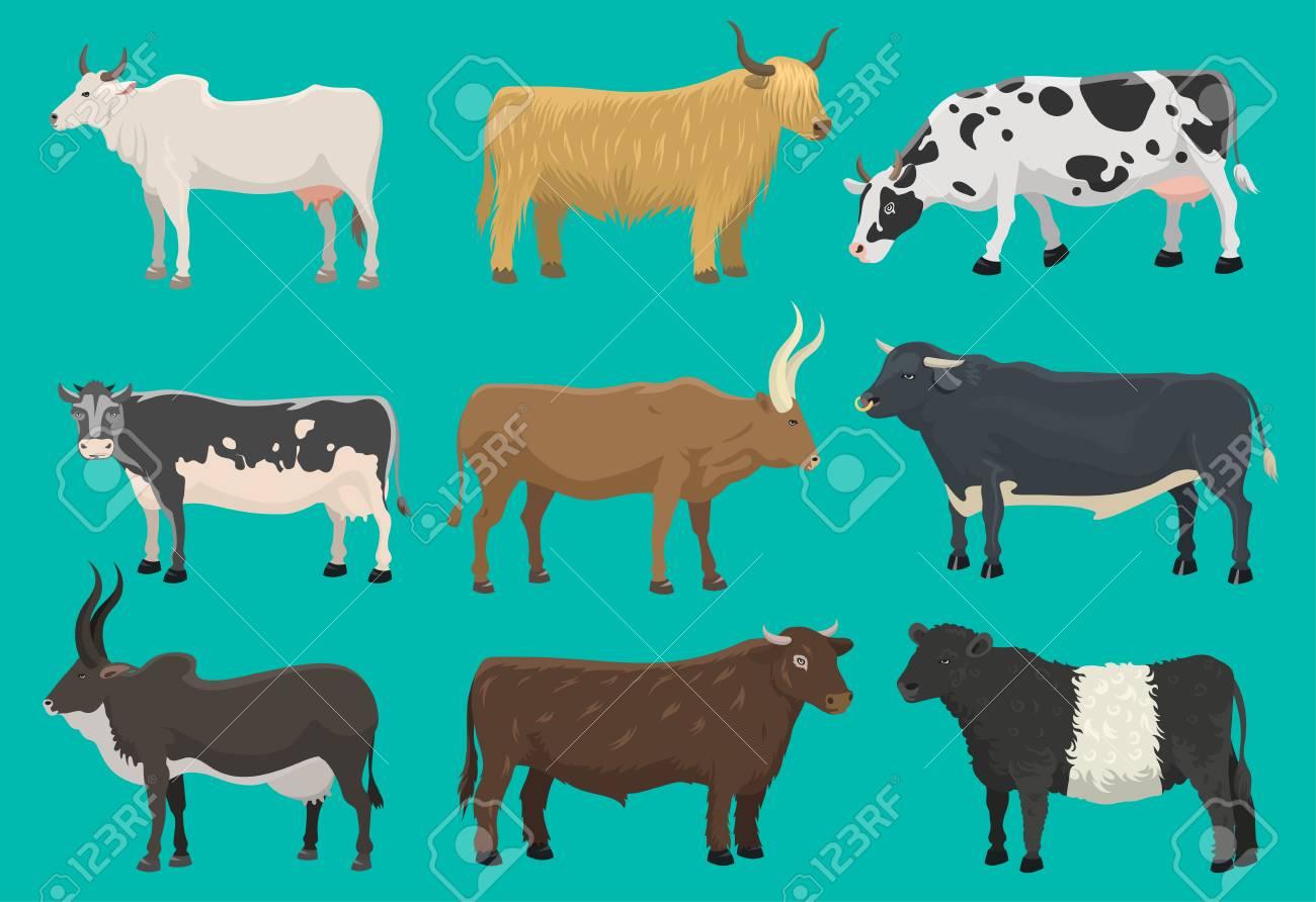 Vector of bulls and cows farm animal - 96723331