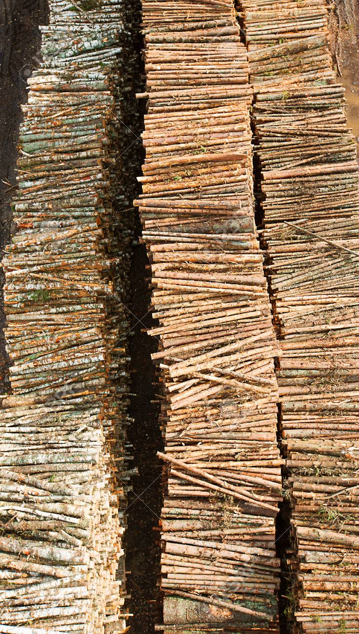 Renewable resource - raw timber materials ready for transportation in dock Stock Photo - 16642315