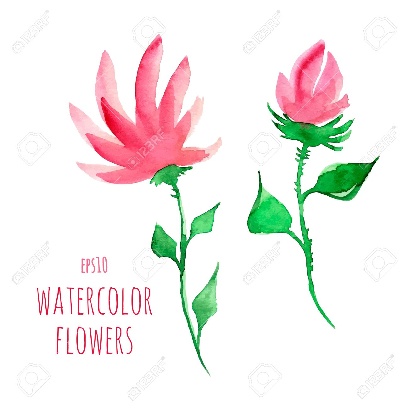 Watercolor Flowers On A Transparent Background Royalty Free Cliparts