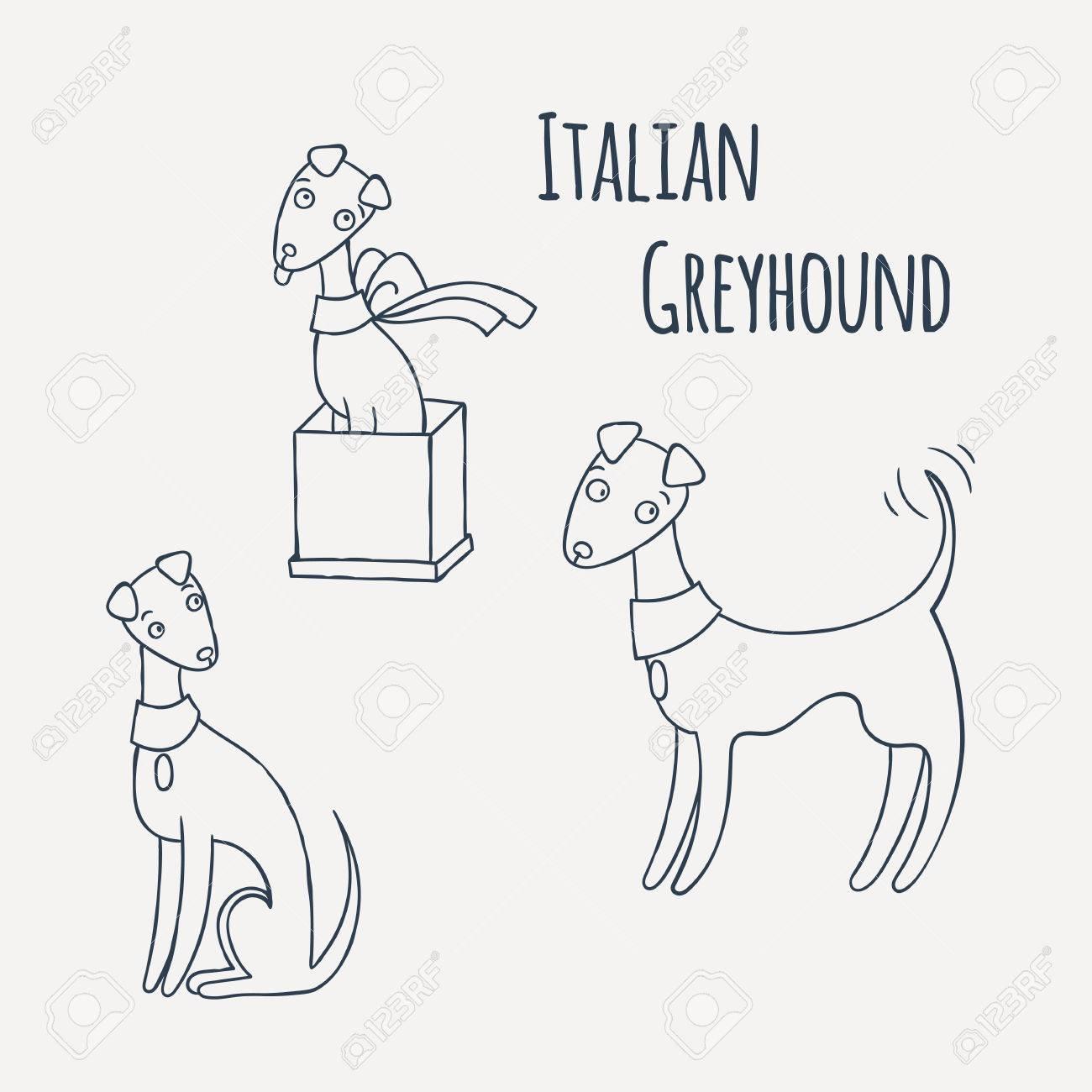 Conjunto Del Perro De La Historieta Del Galgo Italiano Dibujo Para Colorear Ilustración Vectorial