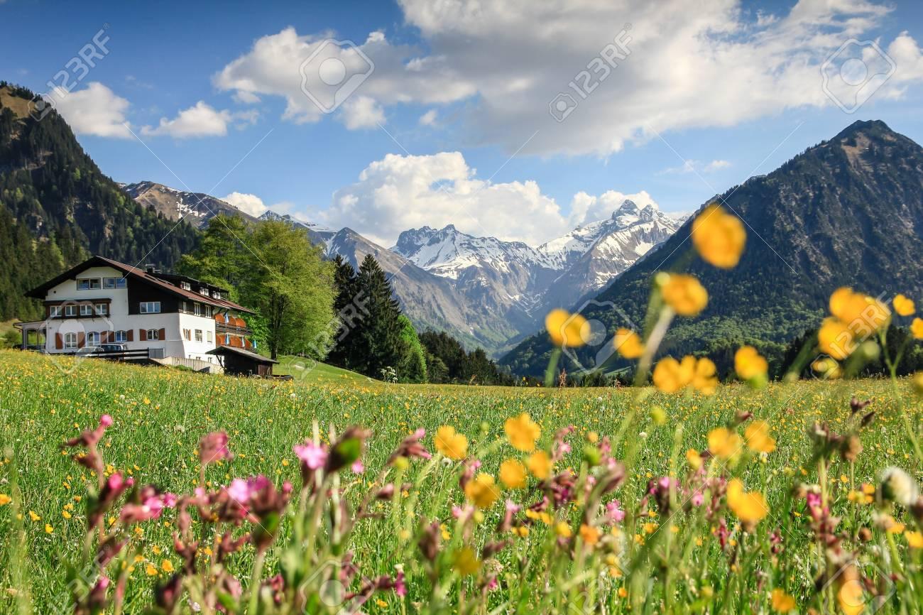 Schöne Blumenwiese Und Schneebedeckte Berge Lizenzfreie Fotos