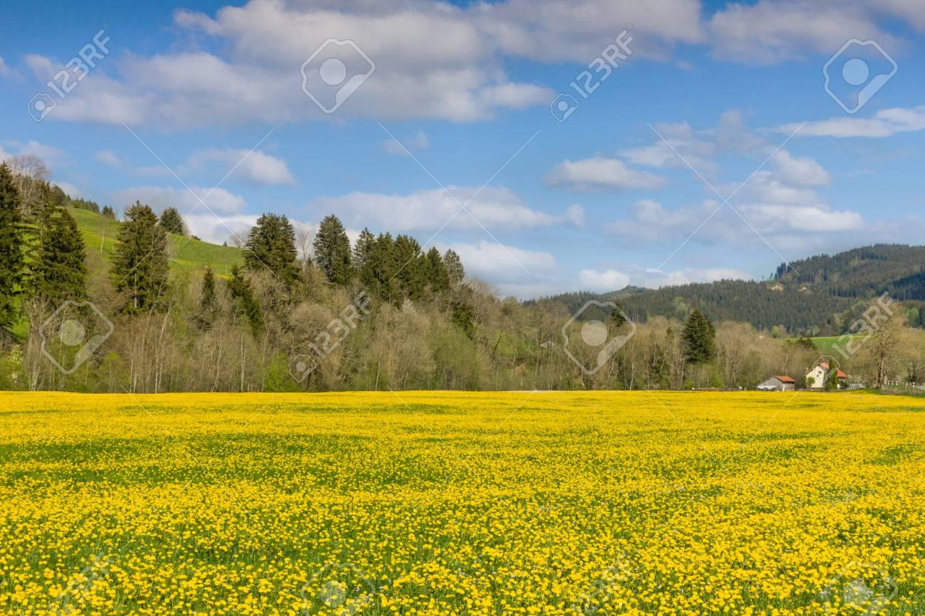 Schöne Gelbe Blumenwiese Und Ein Ranchhaus Im Abstand Lizenzfreie