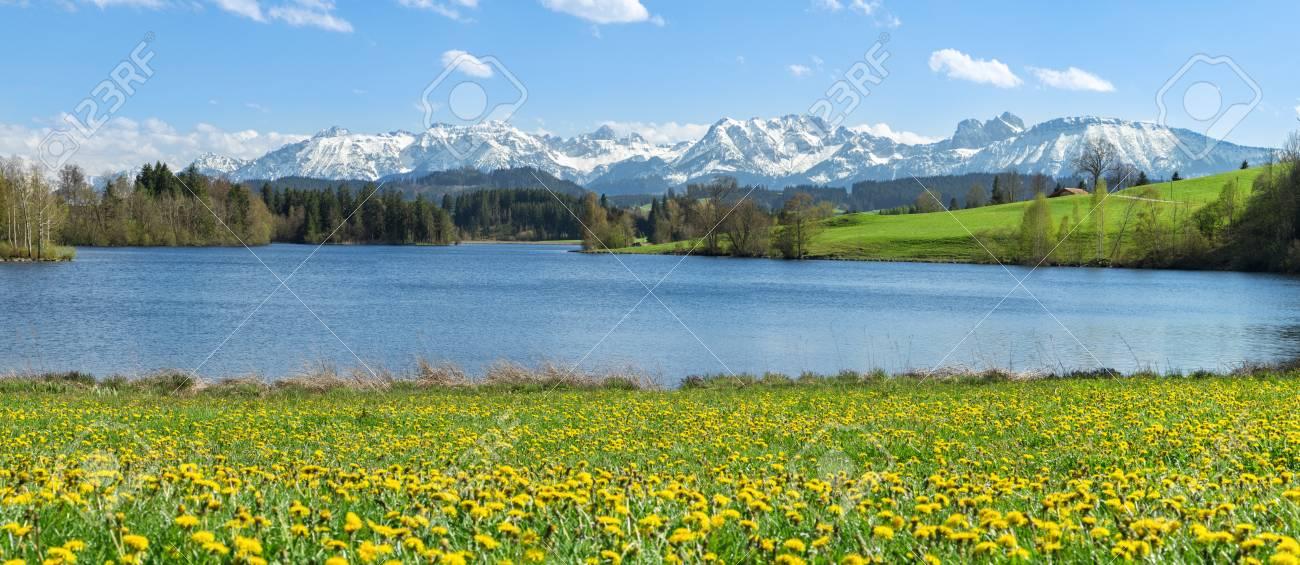 Schöne Blumenwiese Am Alpinen See Und Schneebedeckten Bergen
