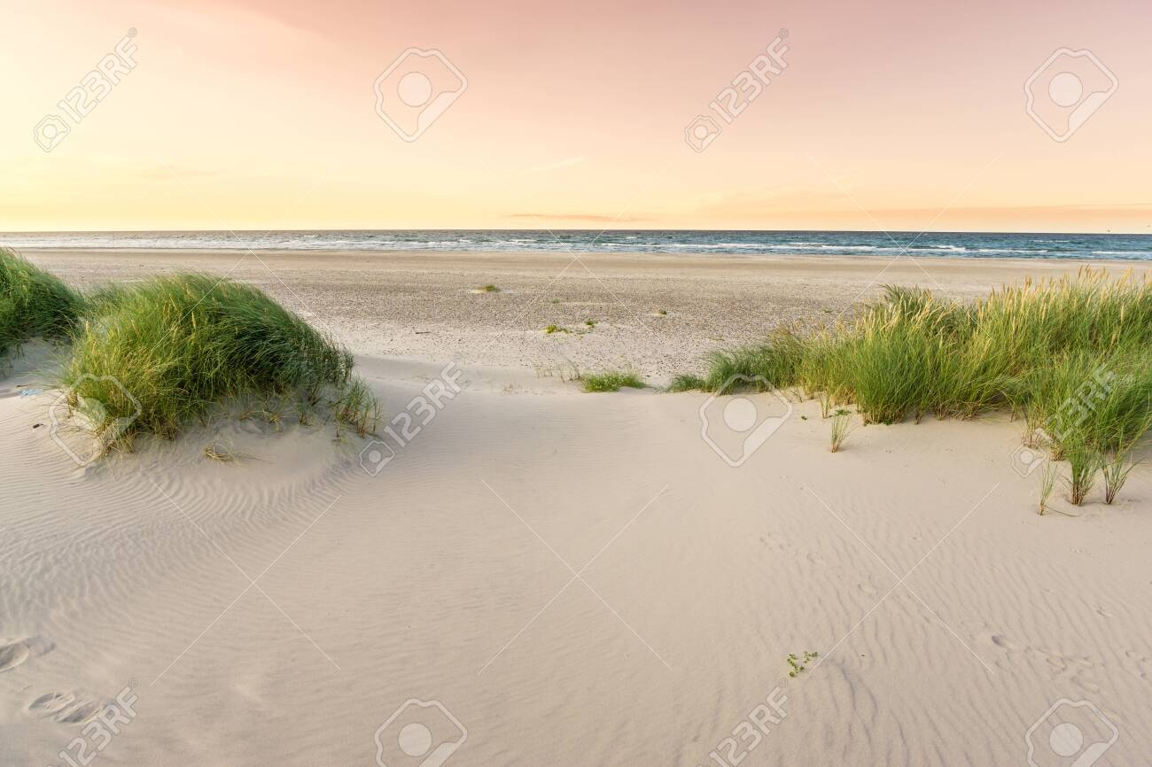 Beach with sand dunes and marram grass in soft orange evening sunset light. Beach dunes at Skagen Nordstrand where Baltic Sea and North Sea are colliding. - 148694031
