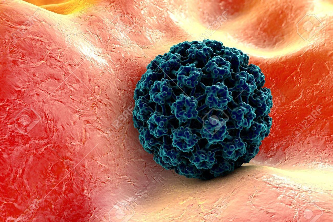 human papillomavirus in cells