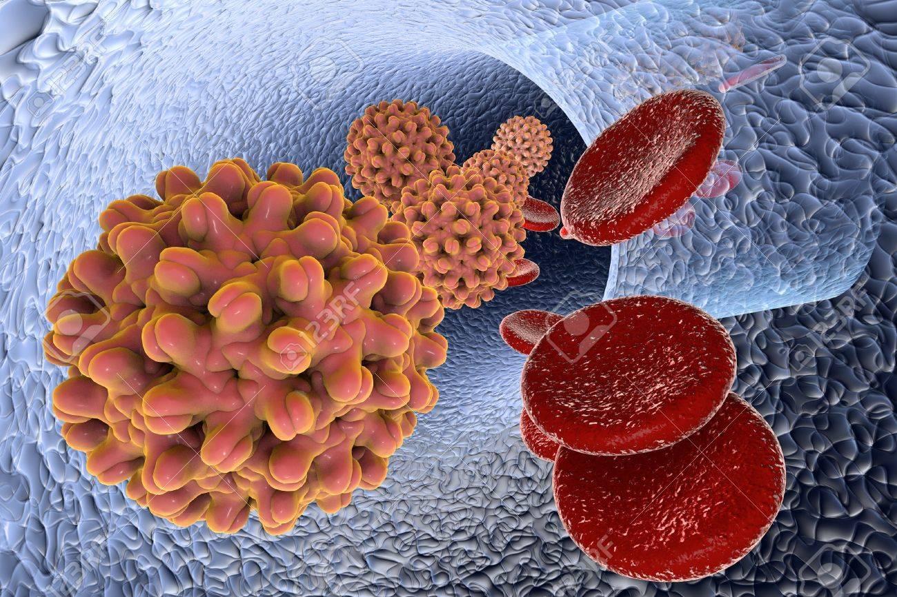 Virus De La Hepatitis B En Los Vasos Sanguíneos Con Células Rojas ...