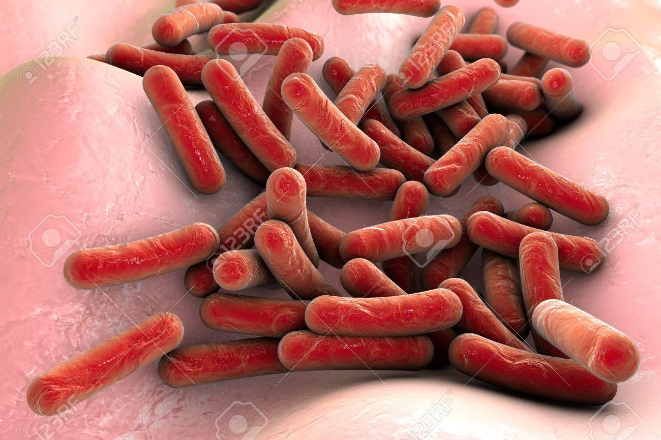 Bacterias Mycobacterium Tuberculosis Dentro Del Cuerpo Humano, Vista ...