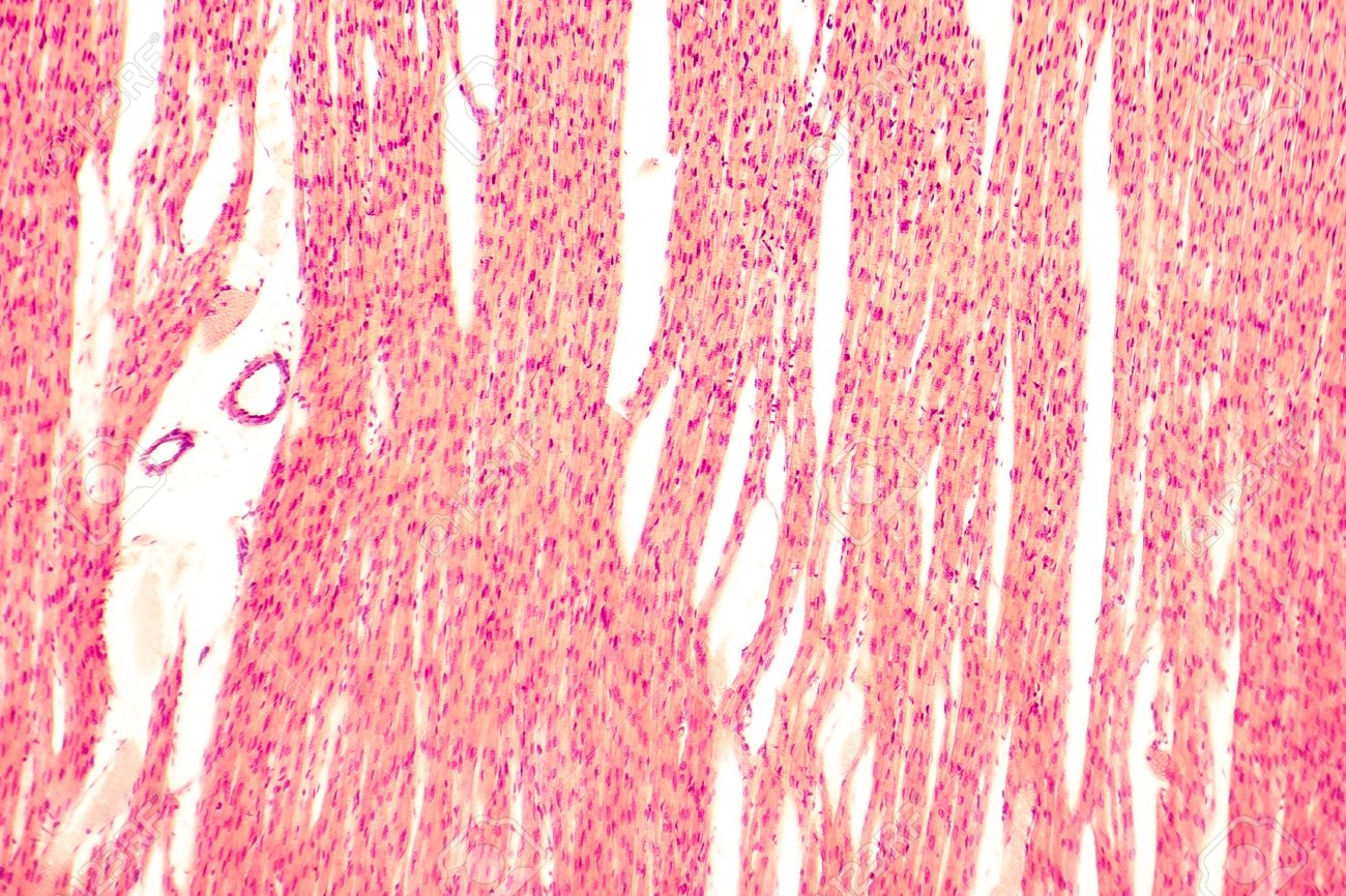 Human Muscle Cell Microscope Dinocrofo