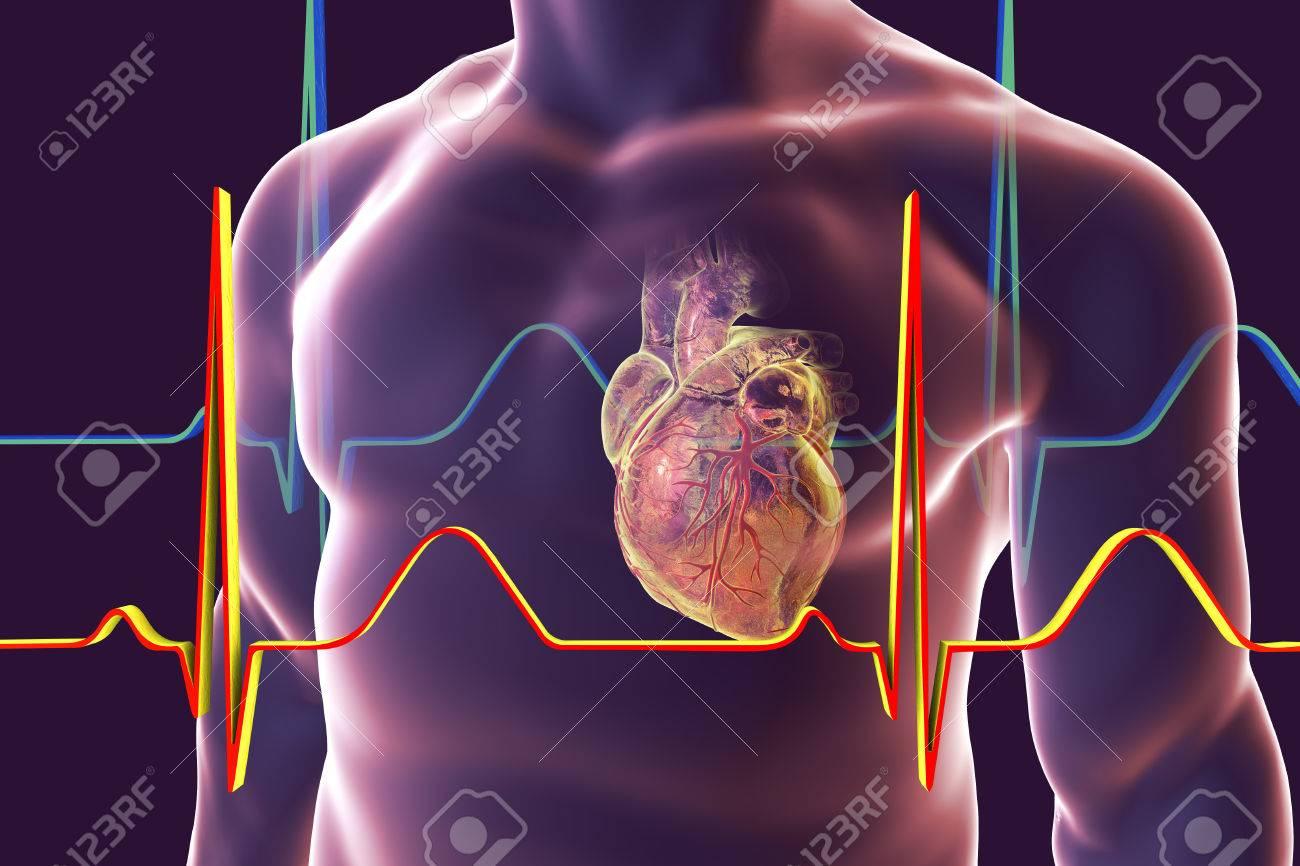 Tolle Menschliches Herz In Körperbild Fotos - Menschliche Anatomie ...