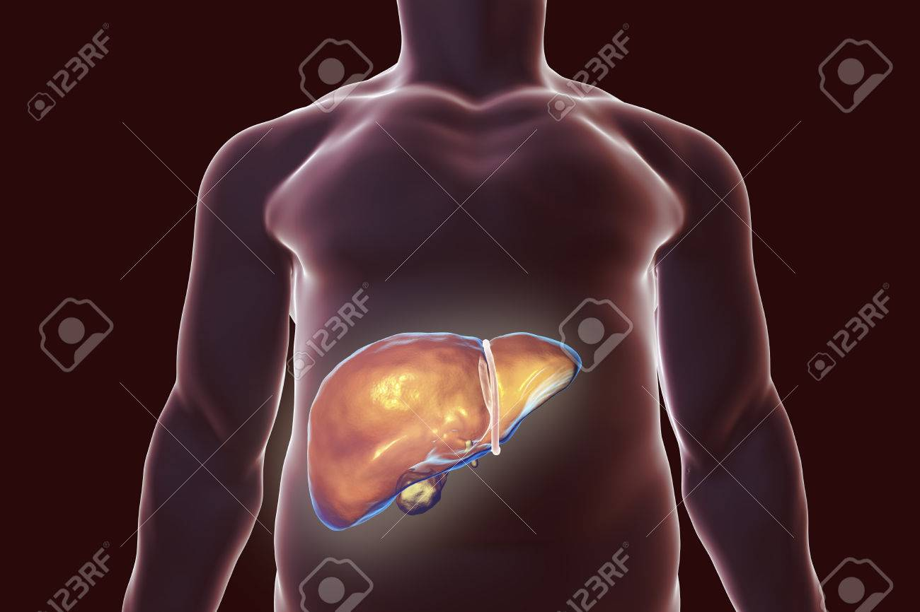 Liver with gall bladder inside human body 3d illustration stock illustration liver with gall bladder inside human body 3d illustration ccuart Image collections