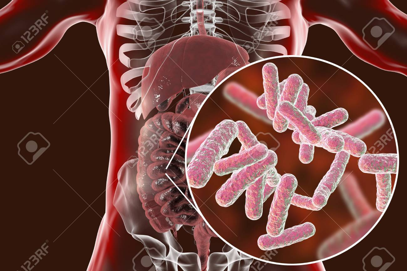 Intestinal Microbiome Anatomy Of Human Digestive System And Stock