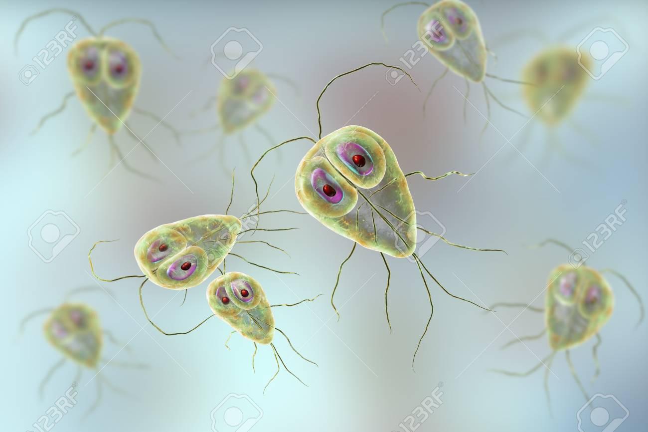 papilloma dermatológia víztározó enterobiasis