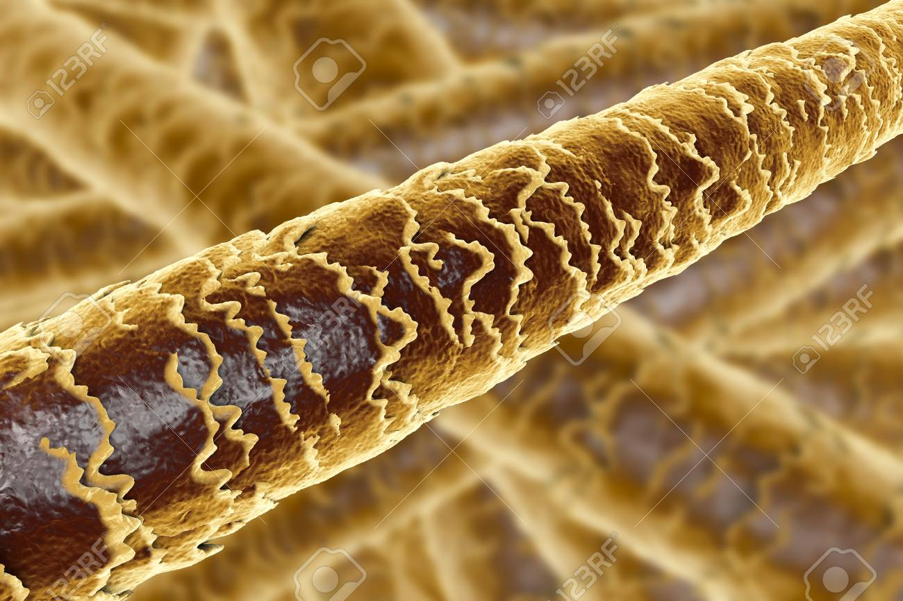 Human Hair Under Microscope 3d Illustration Showing Close Up