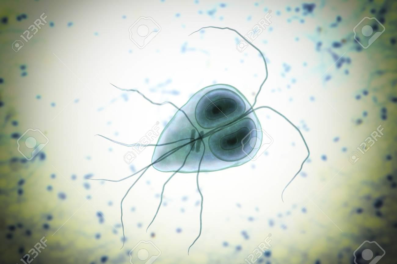 Giardiasis protozoa infection, Fájl:Giardia lamblia SEM ajosagosszekot.hu – Wikipédia