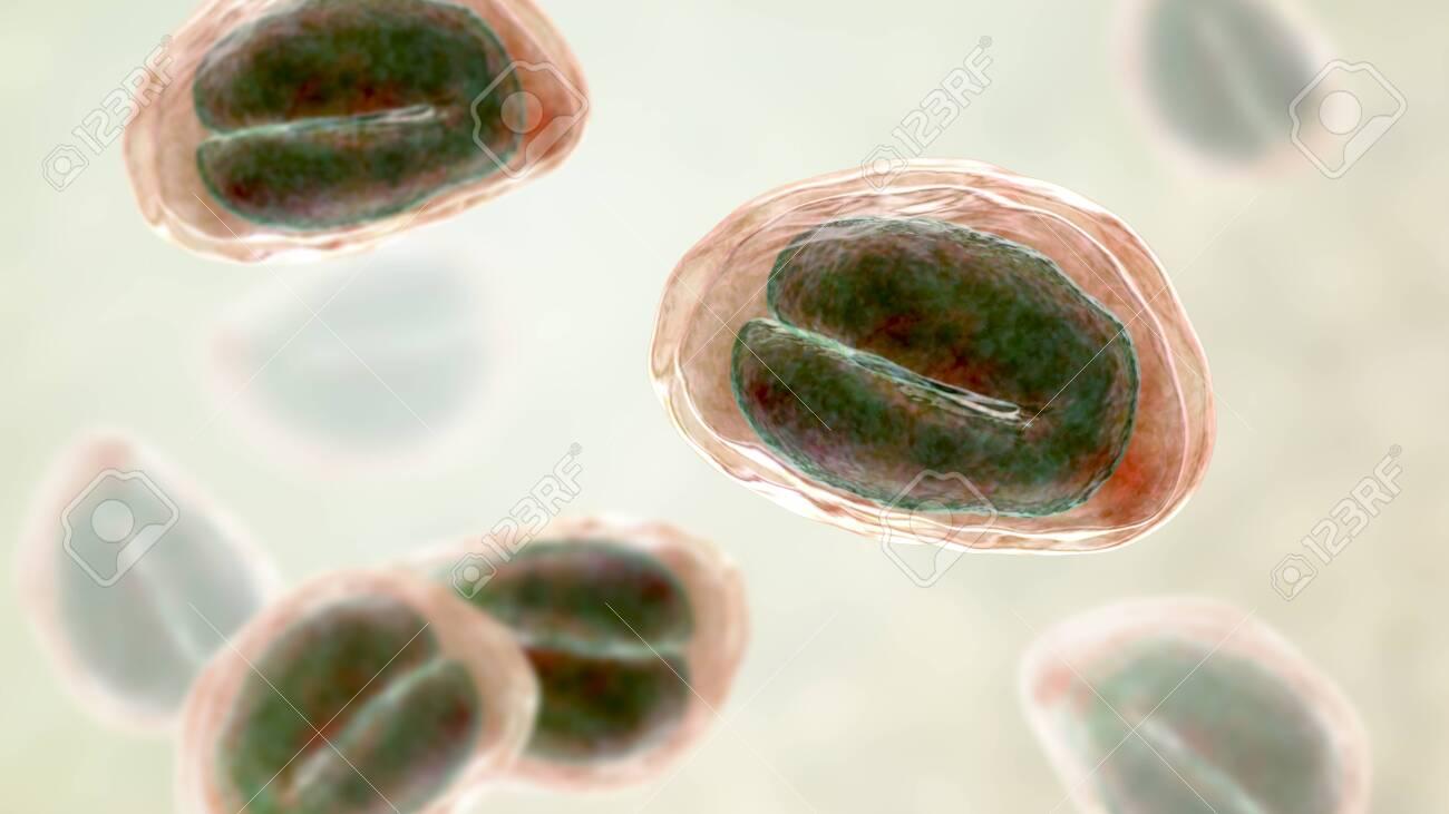 enterobiosis helminthiasis