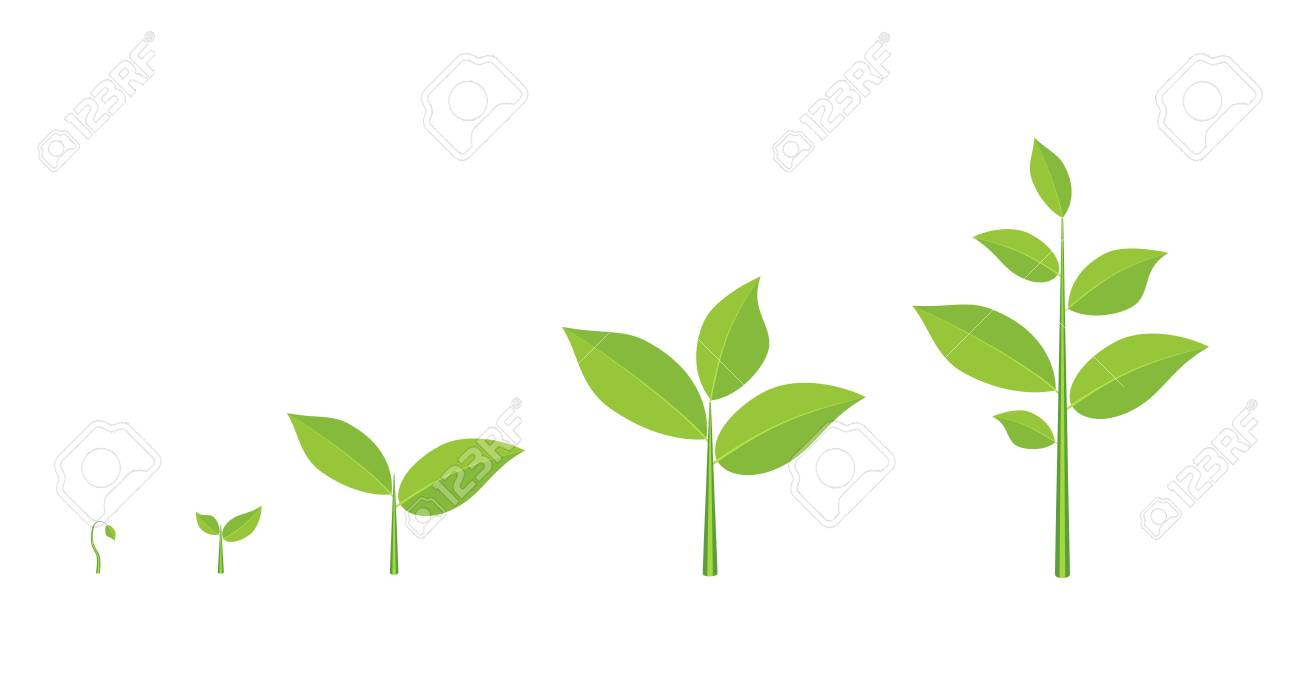 Phases plant growing. - 83251957