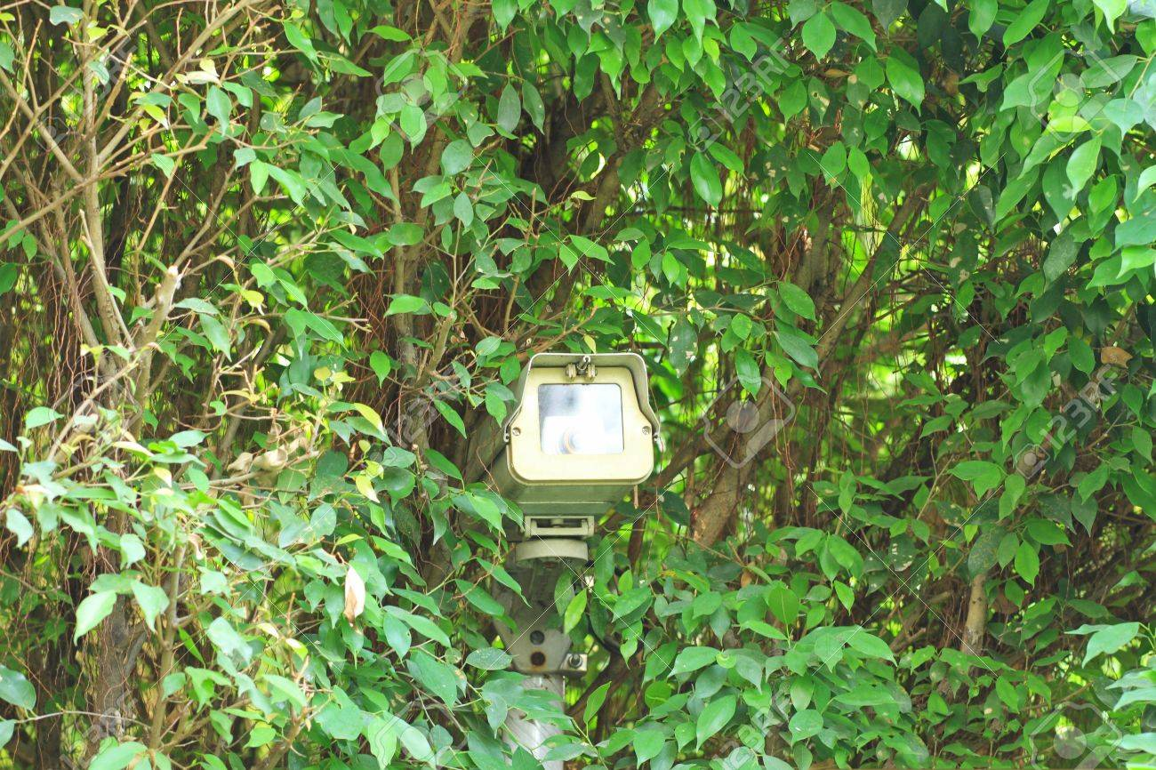 Surveillance camera hided on green tree Stock Photo - 18737263