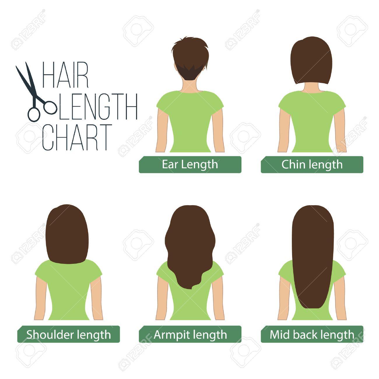 La Longueur Des Cheveux En Arriere Tableau D Affichage 5 Longueurs De Cheveux Differentes Clip Art Libres De Droits Vecteurs Et Illustration Image 60173175